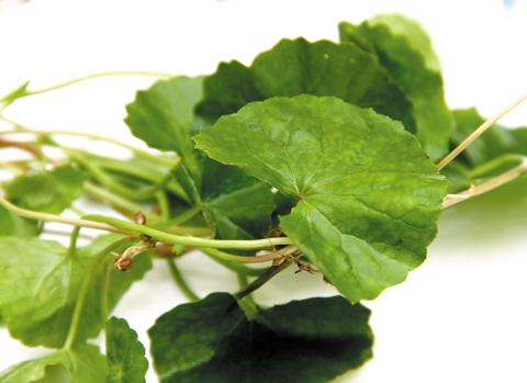 5 loại thực phẩm trị sẹo lõm hiệu quả không thể bỏ qua2