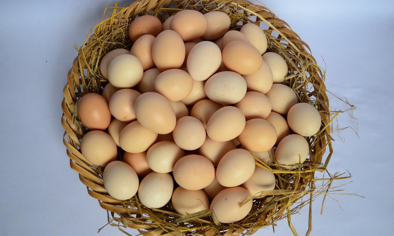 Trị thâm quầng mắt bằng trứng gà cực hiệu quả cho chị em1