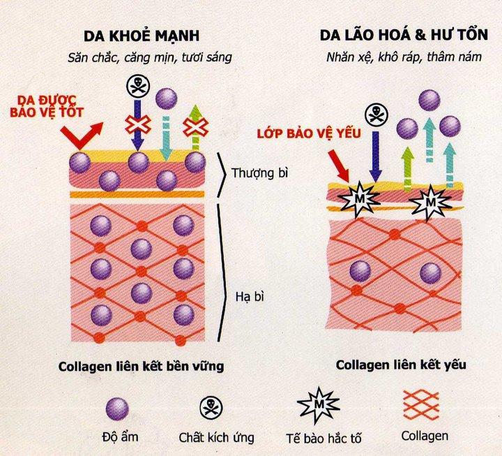 Nhận diện sẹo lồi và cách chữa trị 1